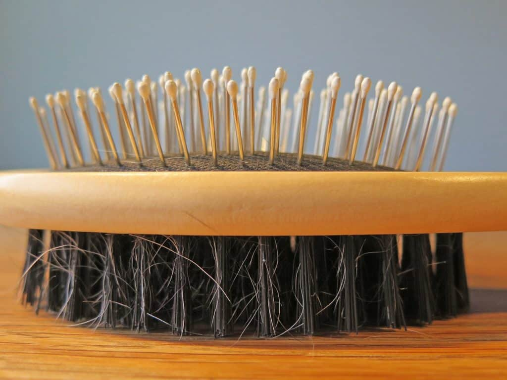 brosse-poils-de-sanglier